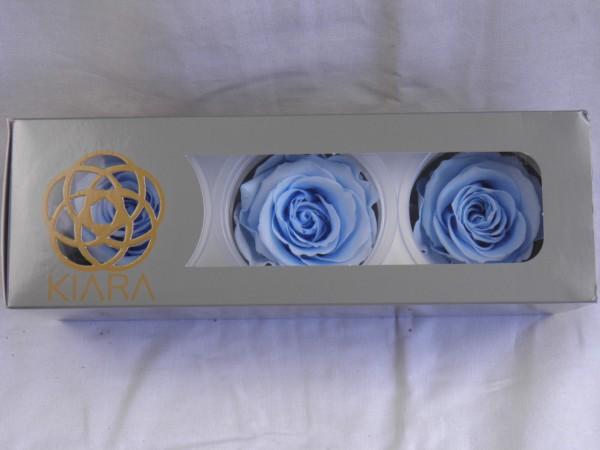 Gefrier Rose Baby Blue