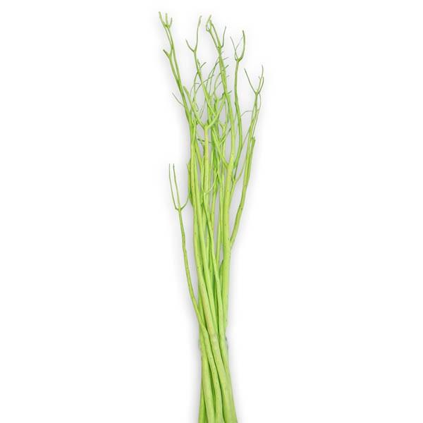 Mitsumata apfelgrün